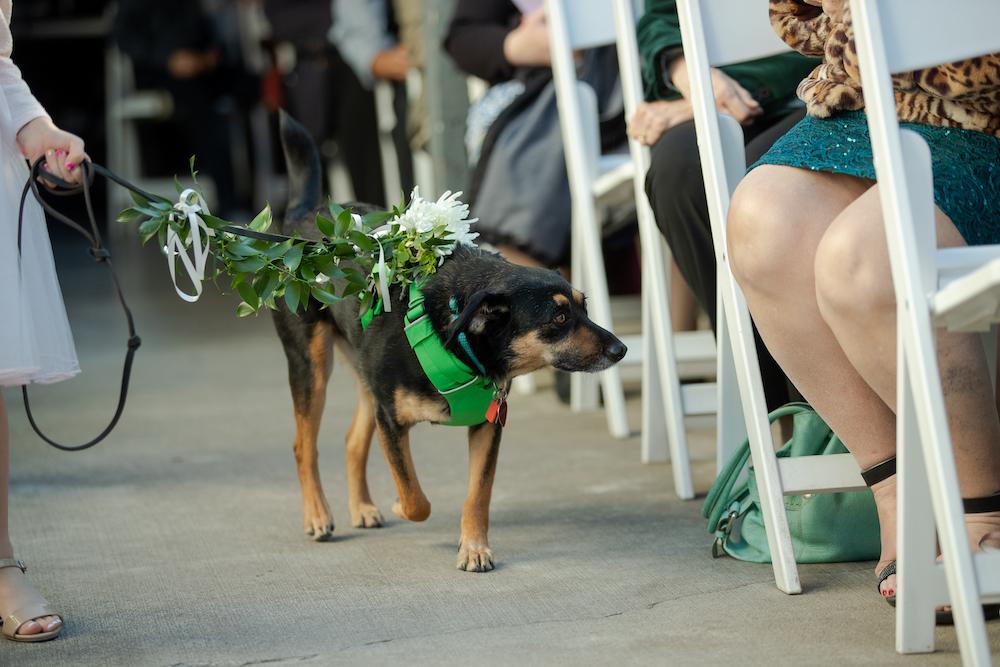 Dog in wedding at Fairlane Station in Northwest Arkansas